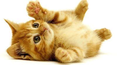 Beste Susse Katzenbilder Susse Katzen Bilder Niedliche Katzchen Susse Katzen Bilder Katzen Bilder