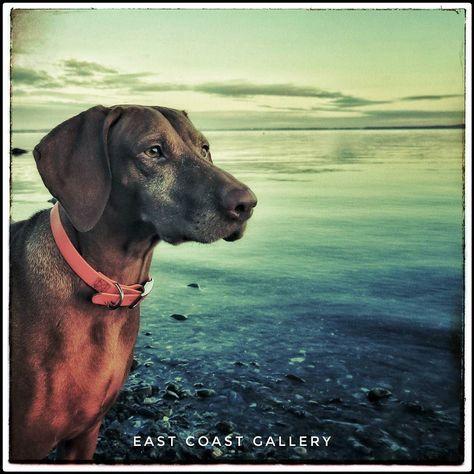 fotografie Quiet Earth #dog #animal...
