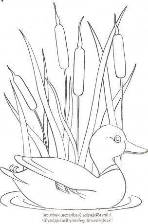Gambar Flora Dan Fauna Yang Mudah Digambar Pemula Dizeen Gambar Flora Dan Fauna Menggambar Bunga Sketsa