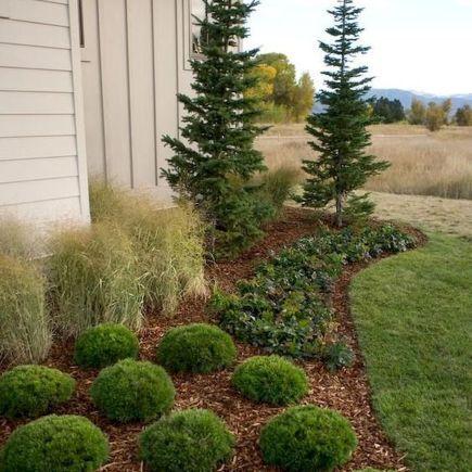 60 Beautiful Front Yards And Backyard Evergreen Garden Design Ideas Artmyideas Evergreen Landscape Grasses Landscaping Front Yard Landscaping