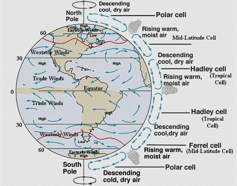 The Earth's rotation (Coriolis Effect) and the presence of scattered continental landmasses, create a secondary wind-induced surface movement, the Gyre Currents. There are five main Gyres working either westward, eastward, poleward or equatorwards.