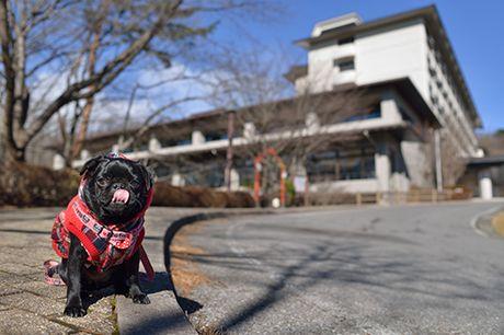 愛犬 ペット と宿泊できる マリオット ラフォーレ ホテル一覧 My Shippo ペットと宿泊 ラフォーレ ペット ホテル