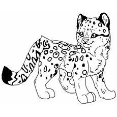 Baby Leopard Malvorlage Coloring And Malvorlagan