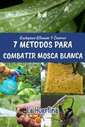 7 Metodos Eficaces Y Ecologicos Para Combatir La Mosca Blanca Insecticida Natural Para Plantas Mosca Blanca Plagas En Las Plantas