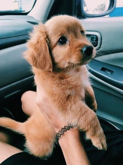 Bcjslalshfkwq Dogs Love Animals Pets Cute Baby Animals Cute