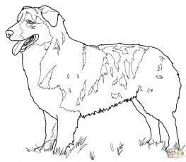 Australian Shepherd Coloring Page German Shepherd Colors Australian Shepherd Colors Australian Shepherd
