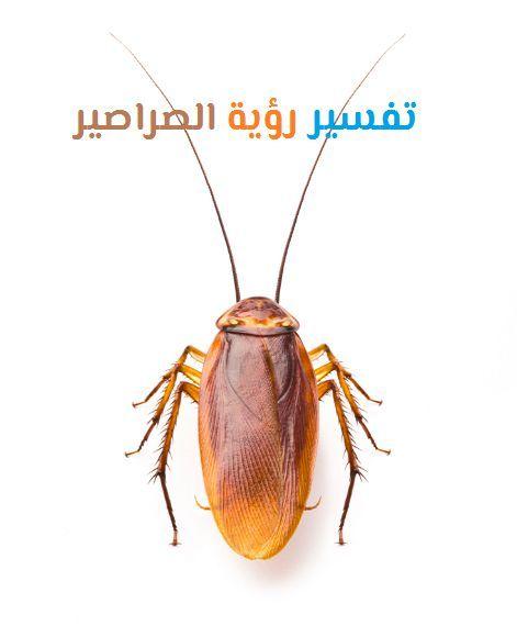 تفسير رؤية الصراصير في الحلم لابن سيرين وابن شاهين موقع مصري Movie Posters Movies Poster