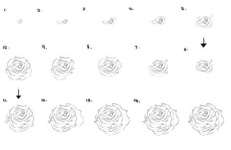 Tuto Dessin Facile Rose Dessin