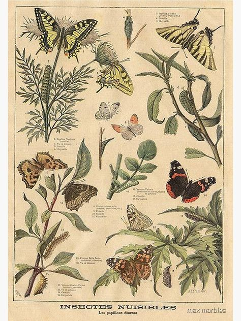 Vintage Botanical, Botanical Drawings, Botanical Art, Photo Wall Collage, Art Collage Wall, Nature Posters, Art, Vintage Botanical Prints, Aesthetic Art