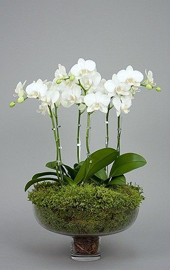 I would love couple of white orchids (real or silk) to arrange in a glass or…