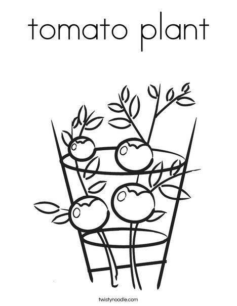Tomato Plant Coloring Page Twisty Noodle Vegetable Coloring