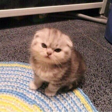 20 Fotos de gatos que fácilmente encontrarán un lugar en tu corazón