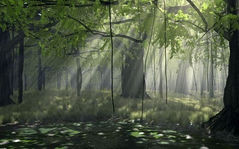 Nature_Forest_Forest_010852_.jpg (1920×1200)