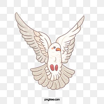 Dove Bird White Dove White Bird Clipart Dove Bird Png Transparent Clipart Image And Psd File For Free Download In 2021 Dove Pictures Dove Images Bird Illustration