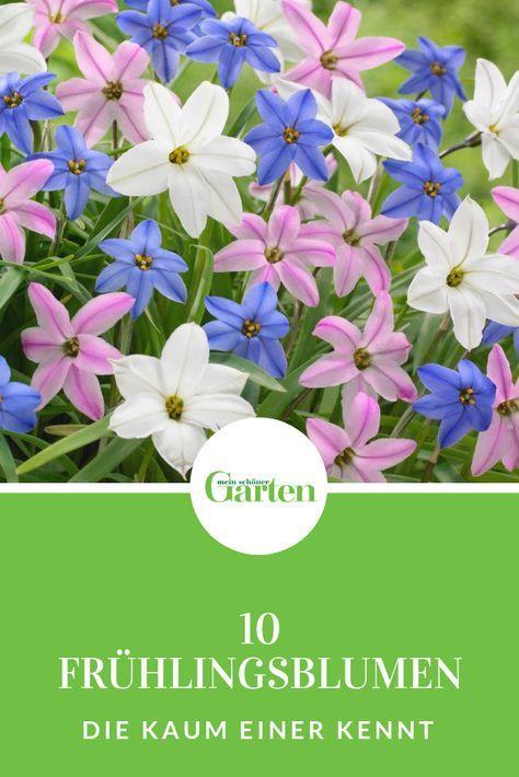 Neben Den Klassischen Fruhlingsblumen Gibt Es Eine Reihe Seltener Schatze Zu Entdecken Diese Blumenzwi Fruhling Blumen Fruhlingsblumen Blumenzwiebeln Pflanzen