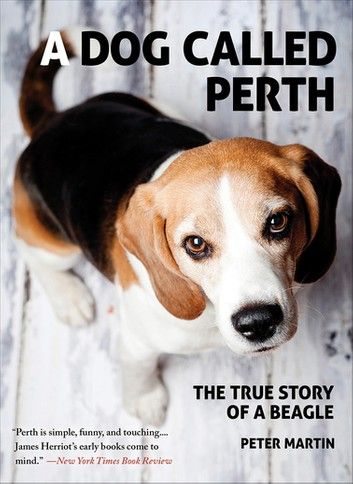 A Dog Called Perth The True Story Of A Beagle Beagle Dogs
