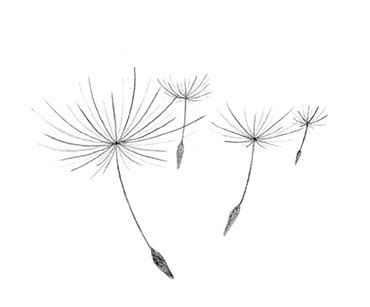 Minimalist Dandelion Tattoo Ecosia Seed Tattoo Dandelion Tattoo Dandelion Drawing