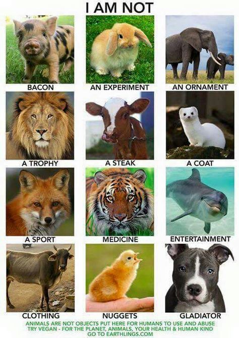 This shows how animals are used for their meat or skin due to a lot of humans wanting money, a lot of the things shown here are just animals saying how they aren't there for our own use and how we use them and what for.