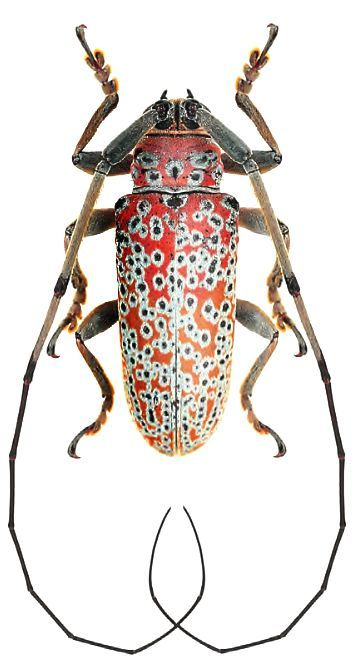 Dismisses The Nylon Bug