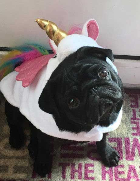 Find The Best Dog Costume For Halloween Cool And Easy Costume