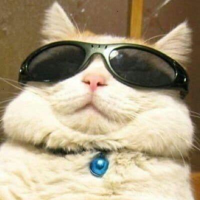 Gatitos Gato Con Lentes Gato Con Gafas Gatos