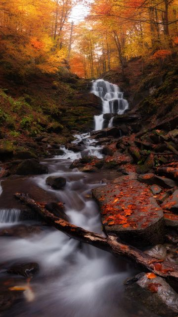 Pin By Wallpapercan On Nature Forest Waterfall Autumn Forest