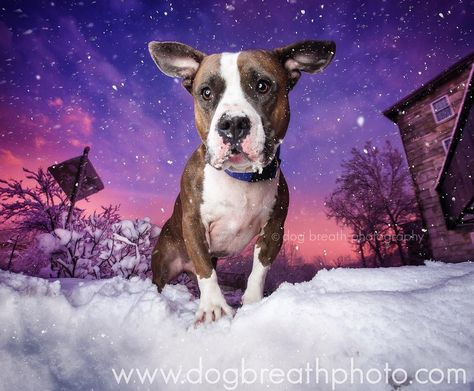 commercialdogphotographer This past weekend we had the...