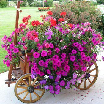Summer Container Garden Flower Ideas In 2020 Container Gardening Flowers Flower Garden Container Garden Design