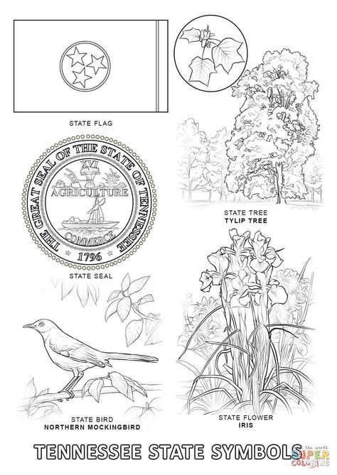 Mississippi State Symbols Coloring Page Free Printable Coloring