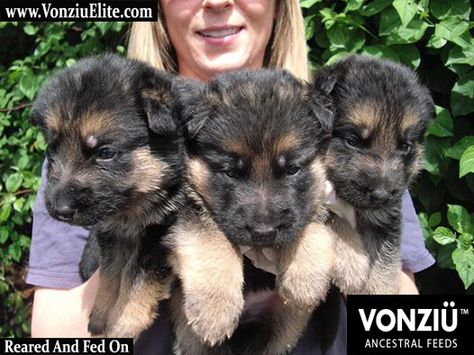 Dogfooduk Diet Dog Food Healthy Dog Food Puppyfooduk Canin Dog