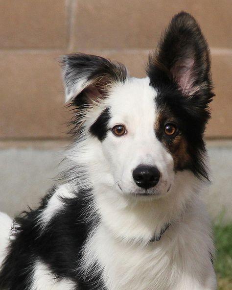 Adorable Dog Named Gadget Best Dog Names Dog Names Dogs