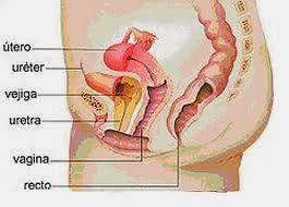 camino del uréter