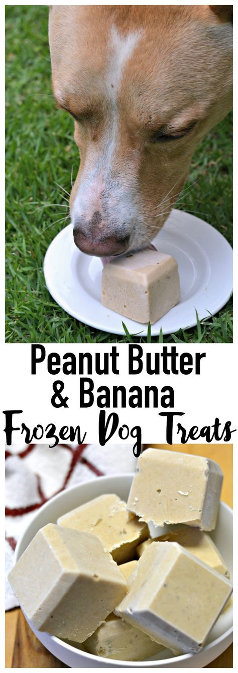 The weather is warming up! Keep your pooch nice and cool with a tasty frosty frozen dog treat!
