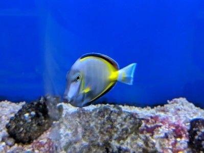 Pin On Saltwater Fish