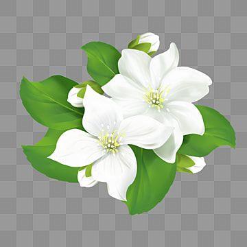 Flor De Jasmim Com Elementos De Folha Jasmine Elemento Verde Imagem Png E Psd Para Download Gratuito Pink Flowers Background Plant Clipart Flower Clipart