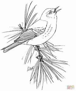 Pine Warbler Coloring Page Free Printable Coloring Pages