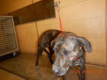 Selene Located In Abilene Tx Has 2 Days Left To Live Adopt Him