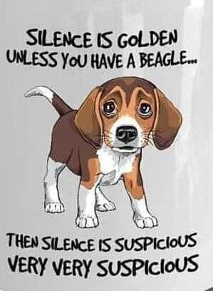 All About The Loving Beagle Pups Temperament Beaglesdaily