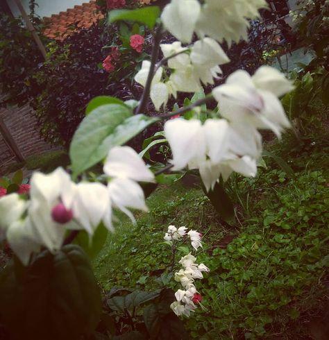 natura Sma sma Bunga dan sama sama...