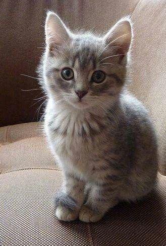 Pin By Derek Helm On Furr Otious Cute Cats Kittens Cutest Cute