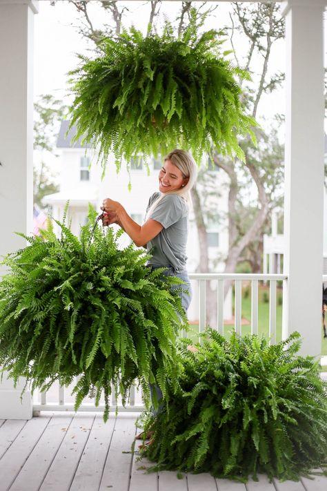 Hanging Ferns, Hanging Plants Outdoor, Hanging Baskets, Porch Plants, Garden Plants, Backyard Plants, Bamboo Garden, Container Plants, Container Gardening