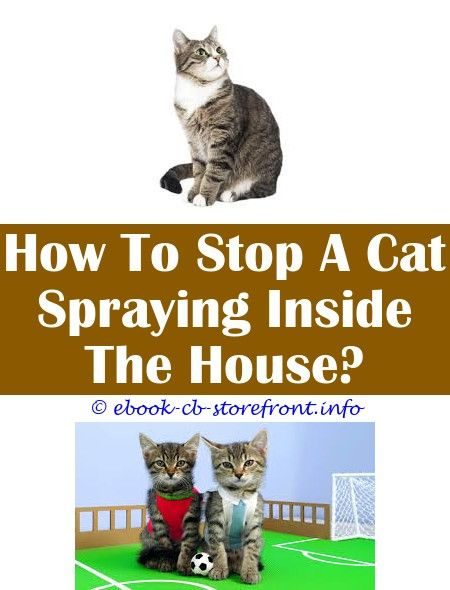 12 Prodigious Stop Cat Spraying In The House Cat Spray Flea Spray For Cats Cats
