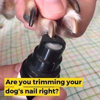 Premium Rechargeable Pet's Nail Grinder