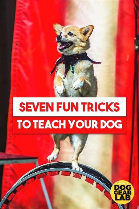 Dog Training Kindle Books Dog Training Pictures Garmin Pro 70