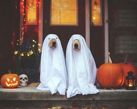 Déguisement pour chien, Halloween