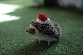 Image Result For Cute Baby Hedgehog Wallpaper Baby Hedgehog Happy Animals Cute Babies
