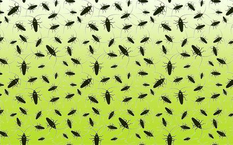 11 Dschungelprufung Der Kakerlaken Sarg Dschungelcamp
