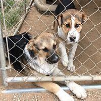 Pet Card Dogs Up For Adoption Dog Adoption Pets