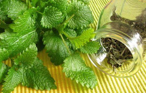 gyógynövényes fogyókúrás tea mellékhatások