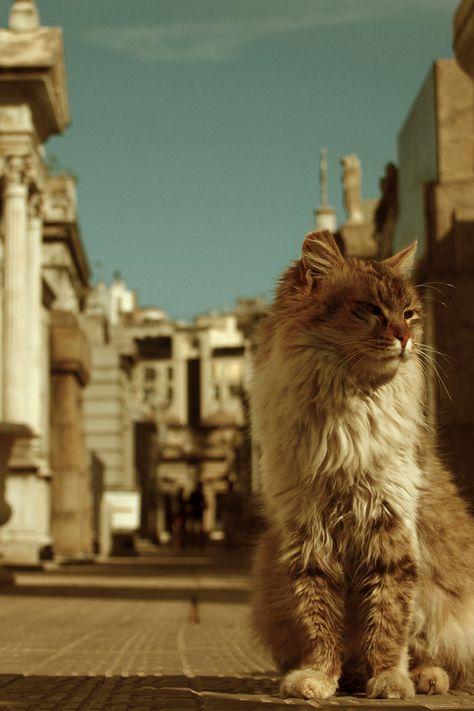 Cemetery cat by vanessa koehler, via 500px